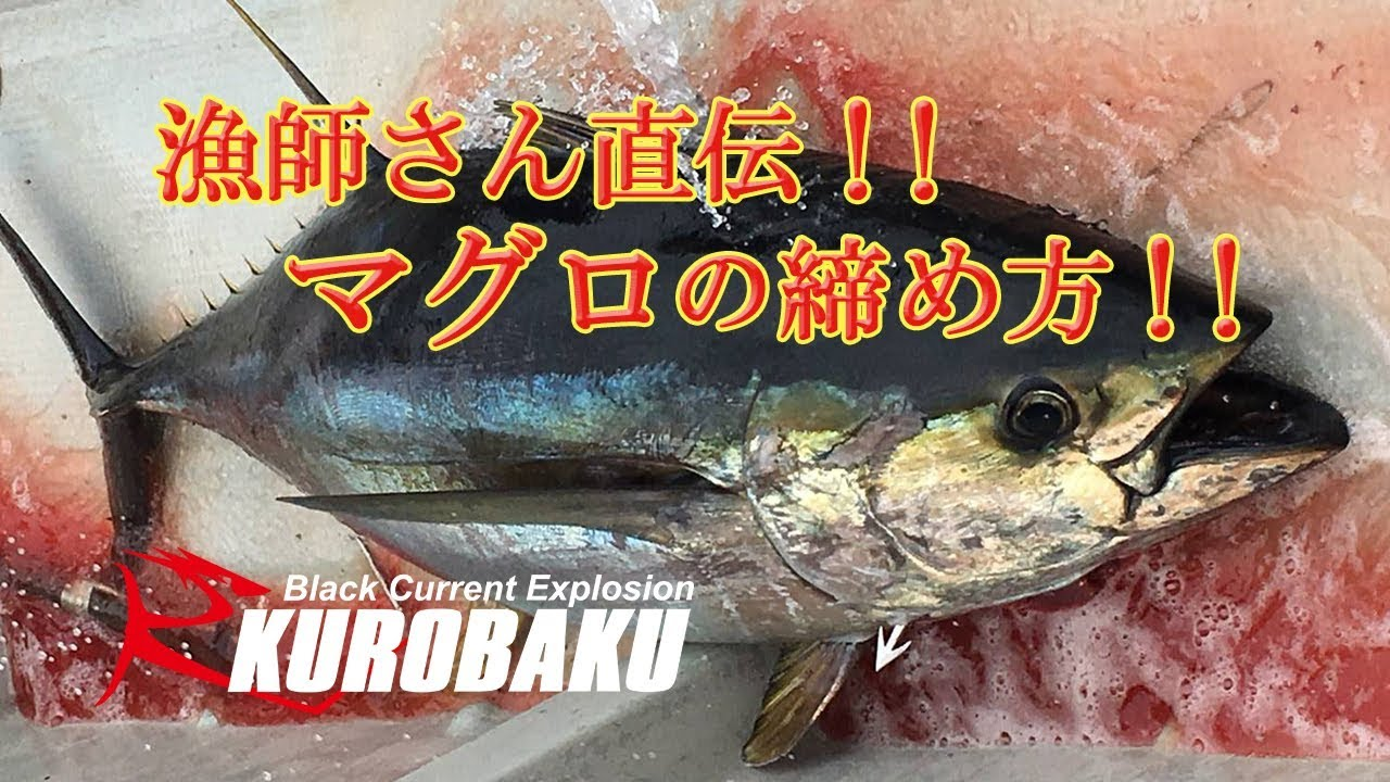 マグロの締め方 漁師さん直伝!のサムネイル画像