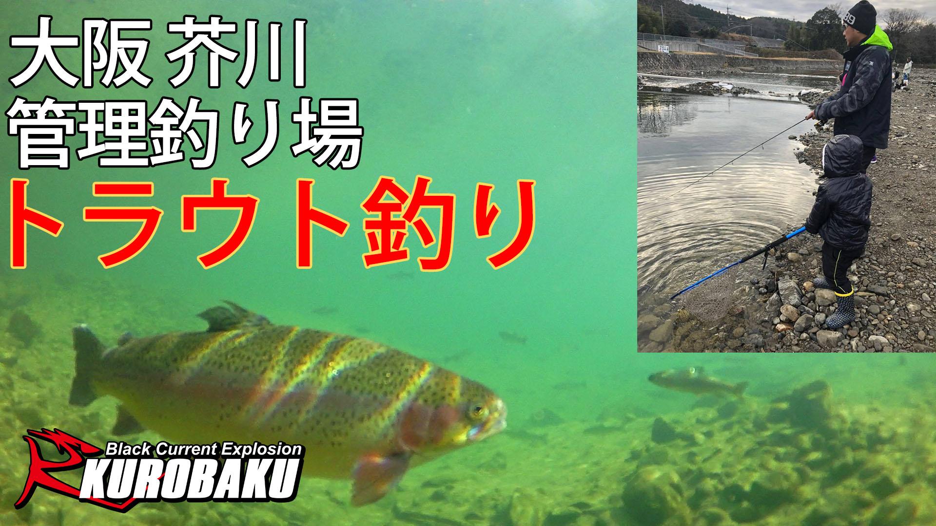 管理釣り場 トラウト釣り 大阪 芥川 のサムネイル