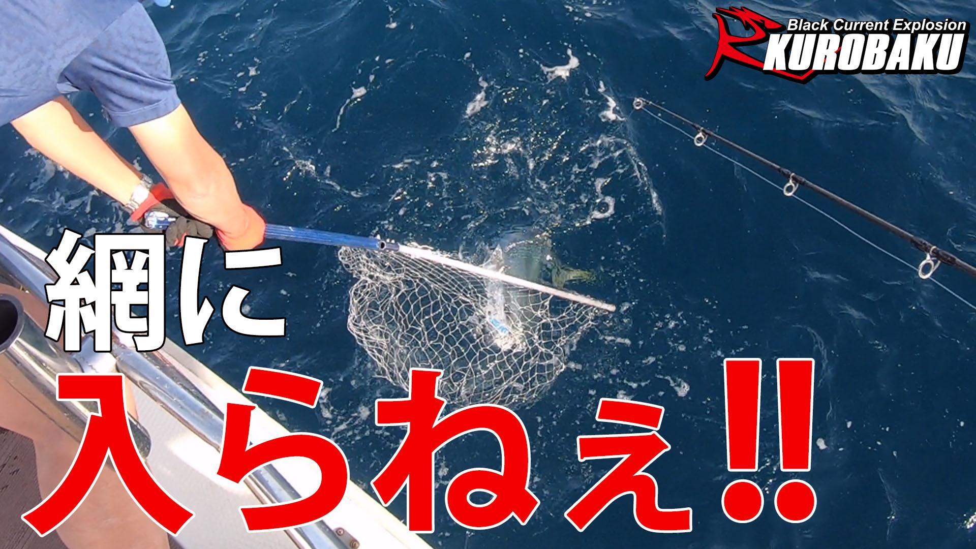 【船釣り】トップで青物を釣りたいのサムネイル