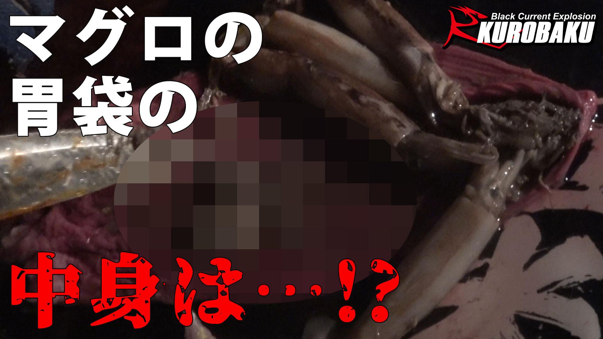 【衝撃】マグロの胃袋から○○○が⁉のサムネイル
