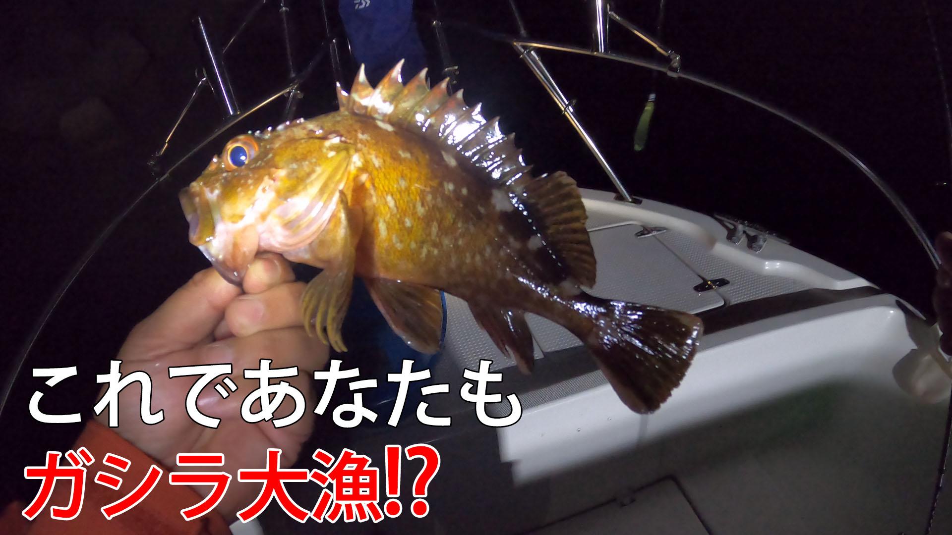 釣りのプロに教わるガシラ釣り解説のサムネイル